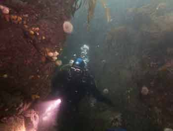 Rosehearty diver in gully