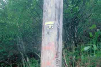 Telephone poll